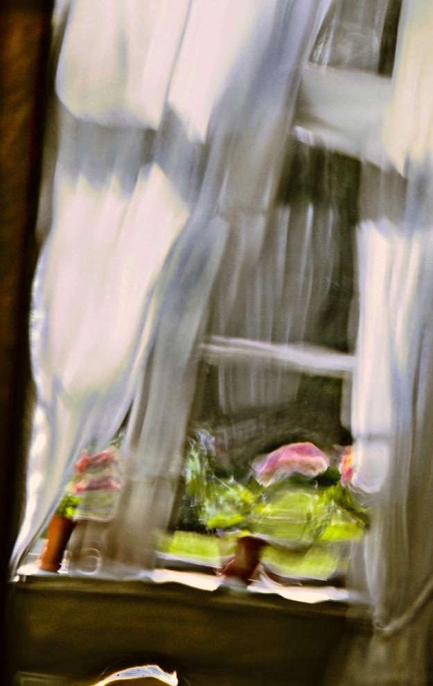 Geraniums In A Window © Jan Oberg 2014