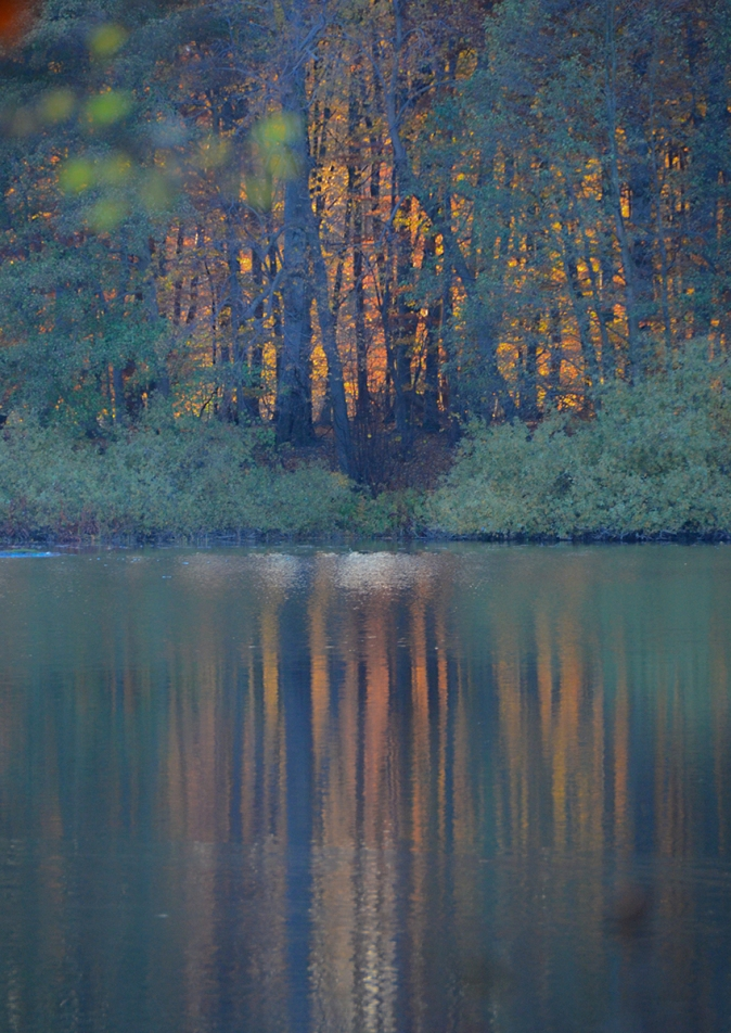 Autumn Composition - Hackeberga, Sweden © Jan Oberg 2015